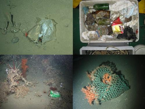 Litter now everywhere in the ocean