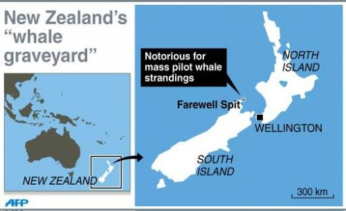 Map showing Farewell Spit in New Zealand, notorious for mass pilot whale strandings