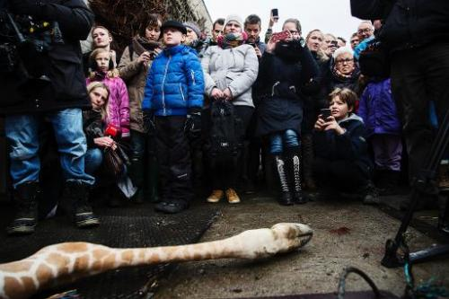Marius was shot dead and autopsied in the presence of visitors to the gardens at Copenhagen zoo on Febuary 9, 2014
