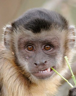 Monkeys can work out abstract properties of objects by looking at them