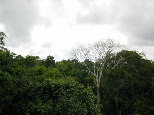 Study shows extra Amazon greenness during drought an optical illusion