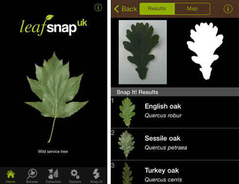 Museum launches tree identification app