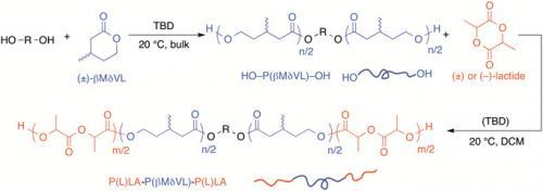 βMδVL polymerization