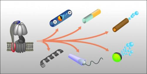 Nano- and microrobots inspired by biological motors