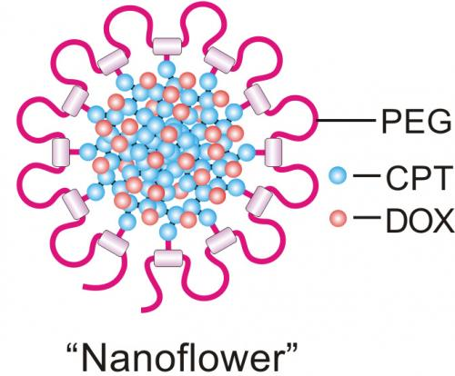 'Nanodaisies' deliver drug cocktail to cancer cells