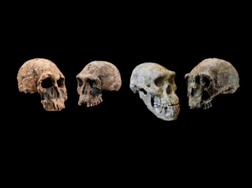 Scientists revise timeline of human origins