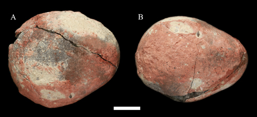 New dinosaur egg with avian egg shape discovered from the Upper Cretaceous of Zhejiang Province, China