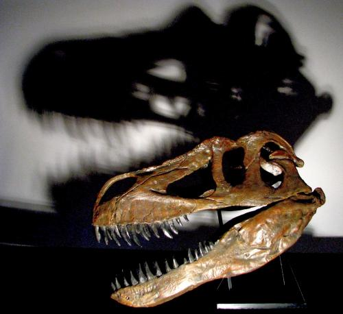 New dinosaur found in Portugal, largest terrestrial predator from Europe