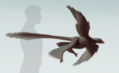 New feathered predatory fossil sheds light on dinosaur flight