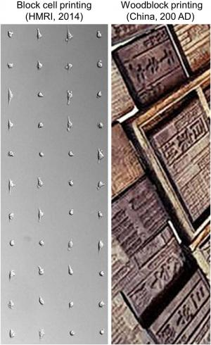 New live-cell printing technology works like ancient Chinese woodblocking