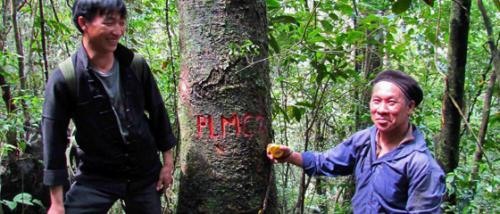 New threatened tree populations discovered in Vietnam