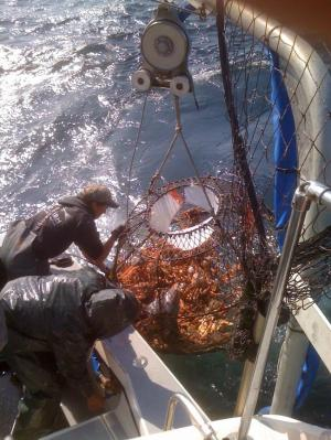 NOAA: Alaska fisheries and communities at risk from ocean acidification
