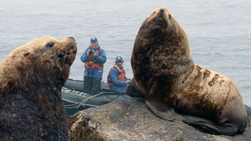 'No jeopardy' to steller sea lions from proposed fishery management changes