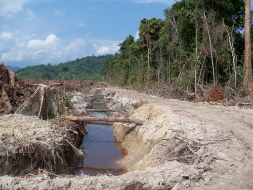 Oil palm plantations threaten water quality, scientists say
