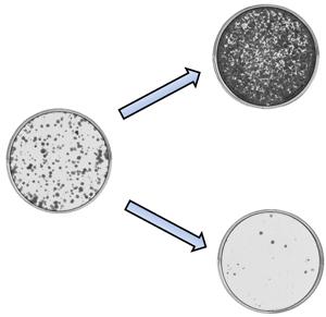 Разные типы метилирования регулируют механизмы клеточного роста и защиты