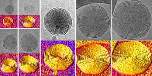 'Onion' vesicles for drug delivery developed