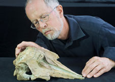 Otago researchers reveal new NZ fossil dolphin