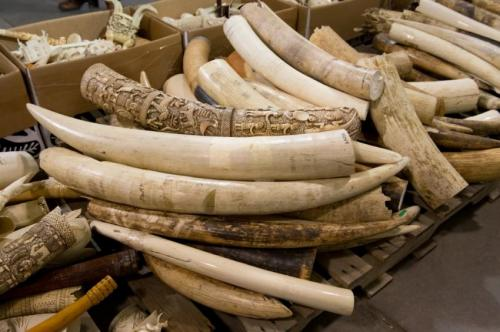 Peer-reviewed paper says all ivory markets must close