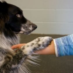 Pets and their therapeutic effects