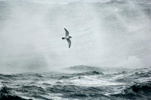 Plankton make scents for seabirds and a cooler planet