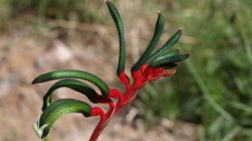 Plant biodiversity under threat from general viruses