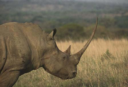 Poaching threatens savannah ecosystems