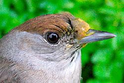 Pollen on birds shows feeding grounds