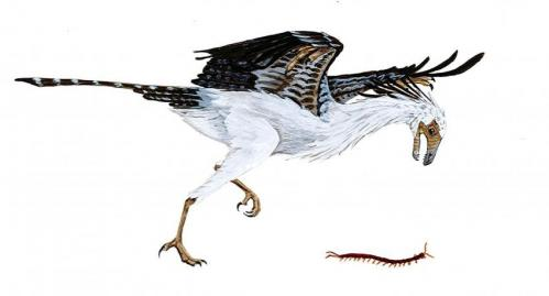 Prehistoric birds lacked in diversity