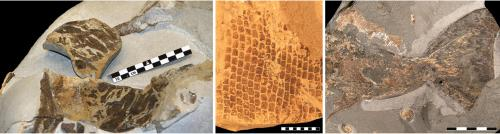 Pigments reveal extinct reptiles' dark side