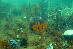 Proliferation of newly discovered Australian sponge species drives medical research