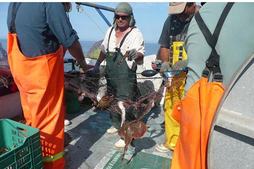 Protecting endangered sea turtles and the local fishing industry