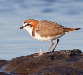 Recreational fishing poses threat to shore-nesting birds