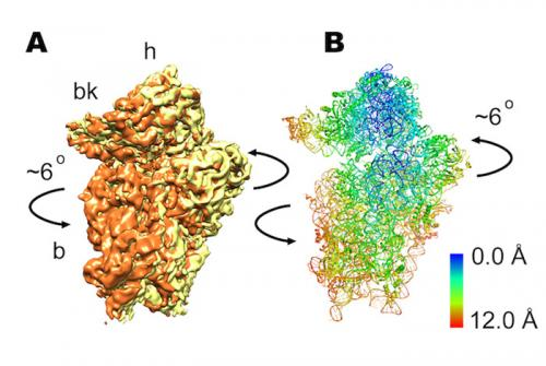 Ribosome research in atomic detail offers potential insights into cancer, anemia, Alzheimer's