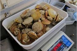 Safeguarding seafood through sea management