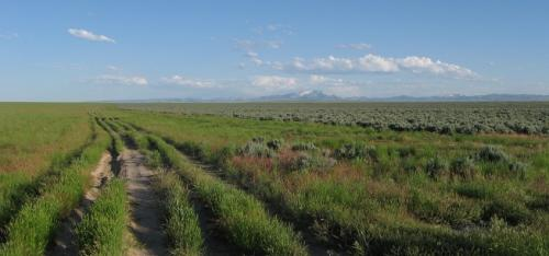 Sage grouse losing habitat to fire as endangered species decision looms