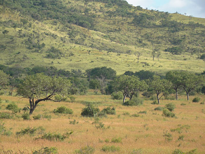 Savanna vegetation predictions best done by continent