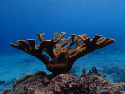 Scientists highlight the importance of nutrients for coral reefs