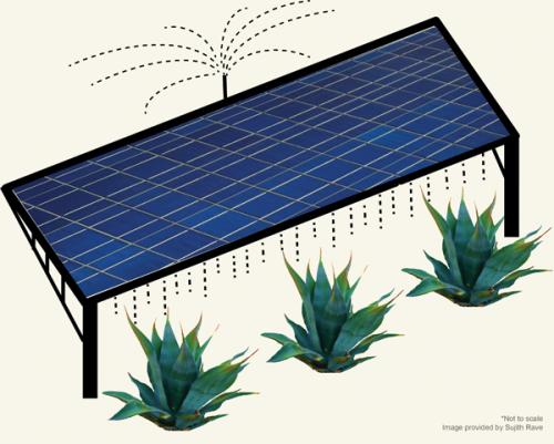 Scientists model a win-win situation: Growing crops on photovoltaic farms