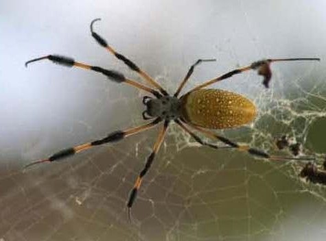 Spiders in space weave a web of scientific inspiration for Spider-Man fans