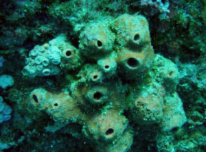 Sponges that sponge off bacteria