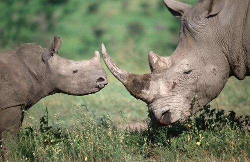 Statistics highlight need for action against rhino poaching