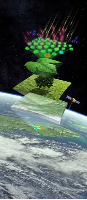Studying crops, from outer space