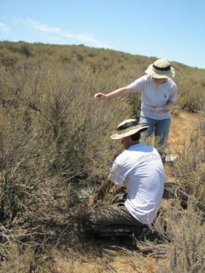 Study suggests air pollution in the Santa Monica mountains is harming native plants, increasing fire risk