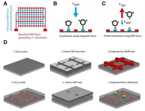 Tiny biomolecular tweezers studying force effect of cells
