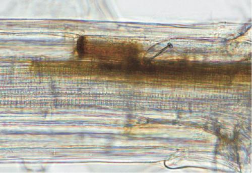 Researchers find nematode incites defense response in plants that benefits itself