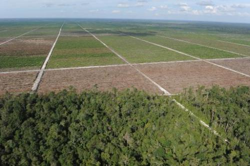 Treeline of remaining rainforest, seen to a newly developed palm oil plantation over cleared tropical forest land in Central Kal