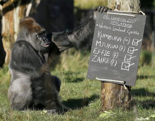 Two by two: London Zoo counts its many inhabitants