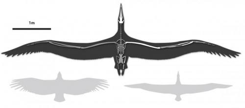 Bruce Museum scientist identifies world's largest-ever flying bird