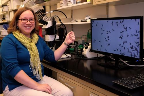 UMSL scholar examines evolution of learning