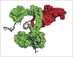 Untying DNA knots